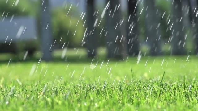 arrosage de pelouse. herbe d'irrigation. - Vidéo