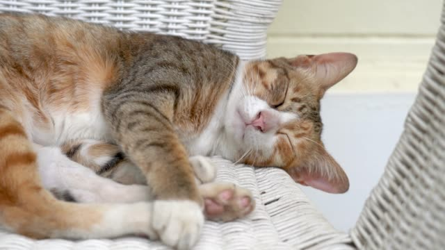 A lazy cat sleeping - 4K footage.