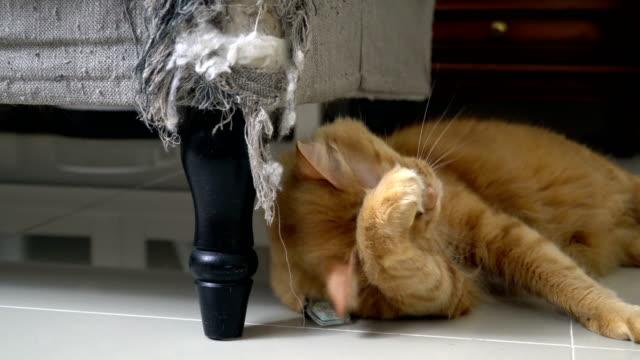 lazy cat - łapa filmów i materiałów b-roll