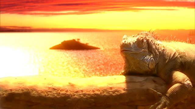 lazy lizard an feiertagen hd - faul ast stock-videos und b-roll-filmmaterial
