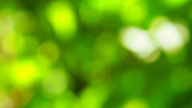 leaf bokeh i skogen, missade fokus - maj bildbanksvideor och videomaterial från bakom kulisserna