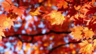 istock Leaf changed color in autumn time 1277078870