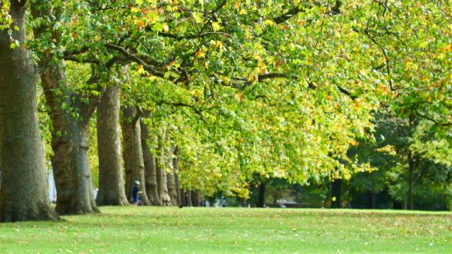vídeos de stock e filmes b-roll de 4k leaf fall in autumn, hyde park, london - parque público
