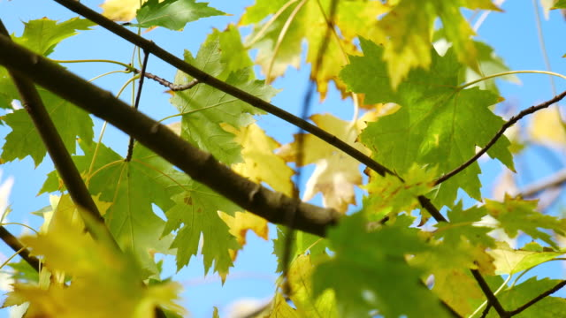 4K Leaf fall in autumn, Hyde park, London video