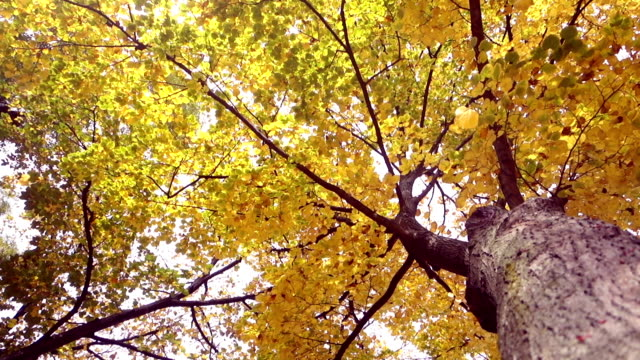 Leaf fall in the autumn video