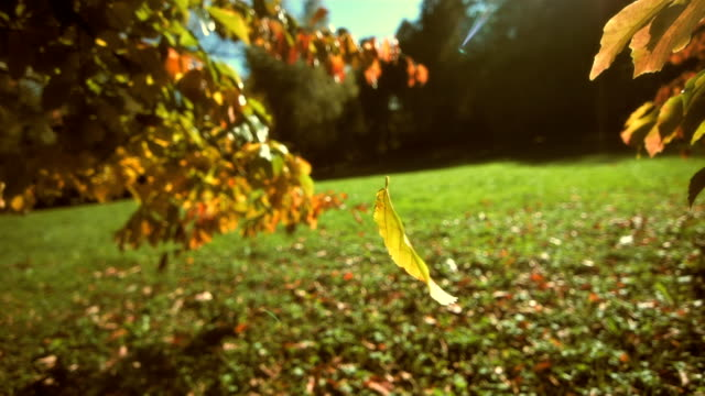 Leaf Falling Off A Tree (Super Slow Motion) video