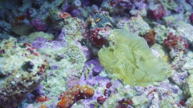 vídeos de stock, filmes e b-roll de peixes-folhas oscilando no recife nas maldivas - equipamento de esporte aquático