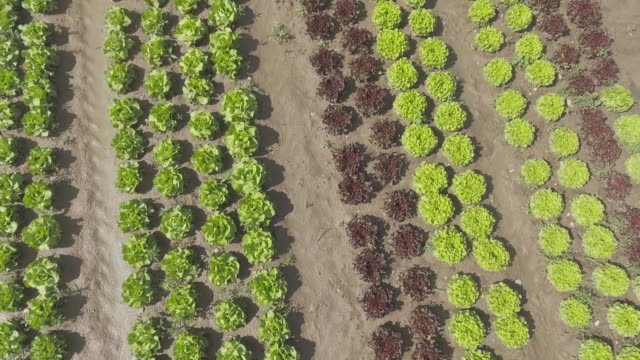 blatt-salatfeld im sommer überführung - aerial view soil germany stock-videos und b-roll-filmmaterial