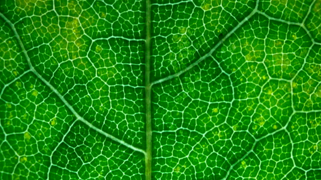 Leaf of the plant. Macro. Dolly shot video