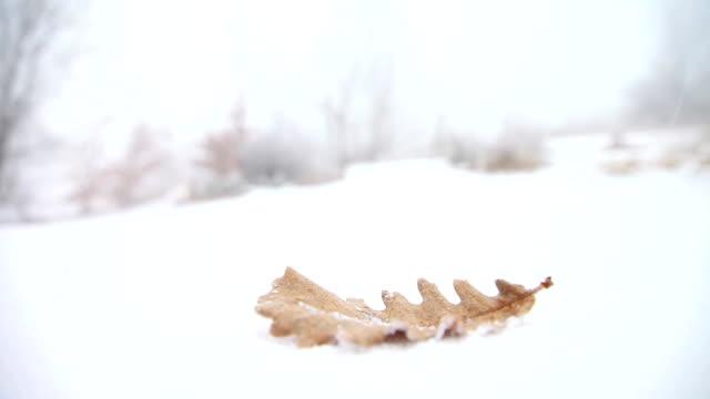 Leaf on snow video