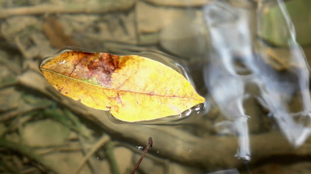 Leaf on the river,Slow motion video