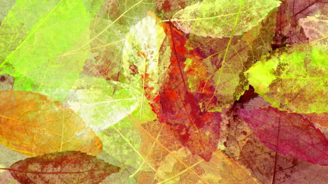Leaf skeletons #1 - HD720p, NTSC-D1 anamorphic, PAL anamorphc video
