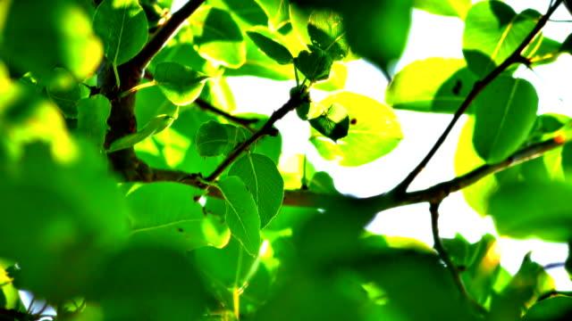 leaf sunlight ray 4k – film