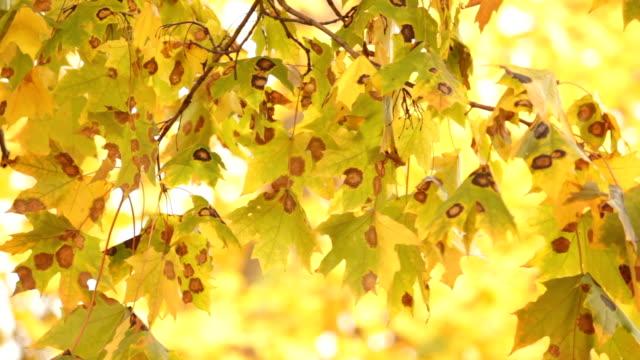 Leaf. – Video