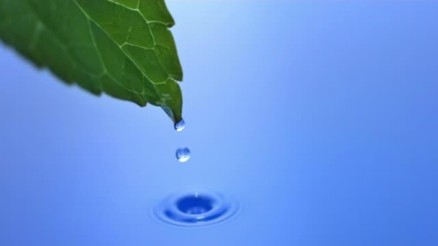 Leaf water drop, slow motion