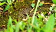istock Leafcutter Ants from Costa Rica 1212637937