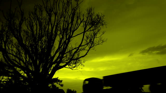 Leafless Tree Silhouette video