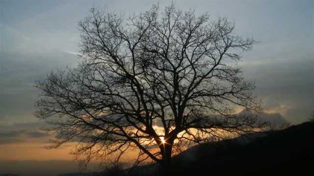 leafless albero - albero spoglio video stock e b–roll
