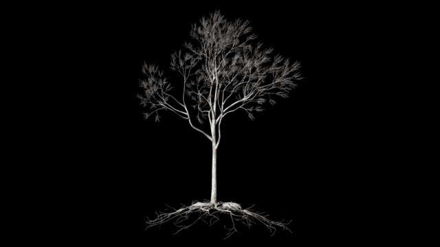 Leafless Tree with roots, timelapse growing, Luma Matte attached