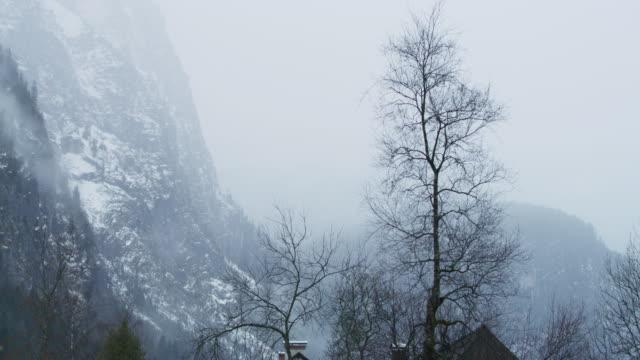 alberi e montagne senza foglie in una giornata nebbiosa - albero spoglio video stock e b–roll