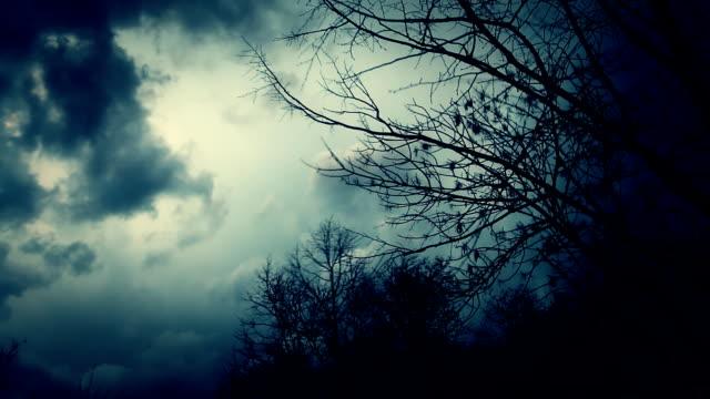 vidéos et rushes de arbres sans feuilles silhouettés et soufflant dans le vent. - froid