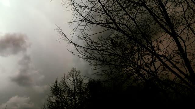 bladlösa träd silhuett och blåser i vinden. - abstract silhouette art bildbanksvideor och videomaterial från bakom kulisserna