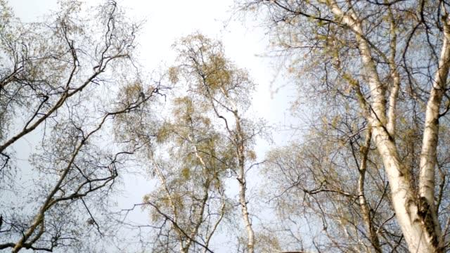 leafless treetops panoramic shot. spring daytime. - albero spoglio video stock e b–roll