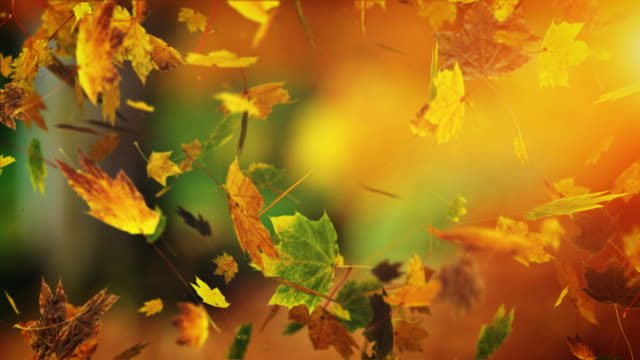 falling leafs - vier jahreszeiten stock-videos und b-roll-filmmaterial