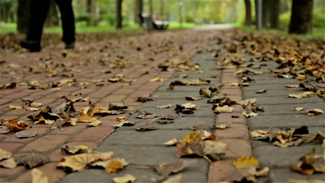 Leafs on the grand in autumn park, man walks. video