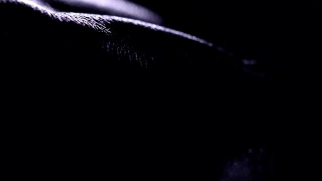 stockvideo's en b-roll-footage met leder in schaduw - dierenhuid huid