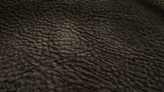 Leather texture background video