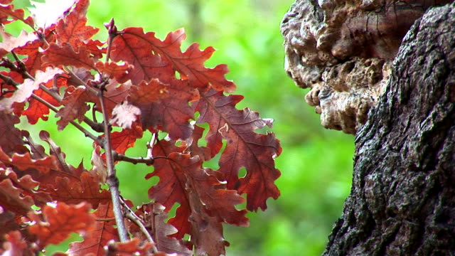 Leaves and bark Leaves and bark grooved stock videos & royalty-free footage