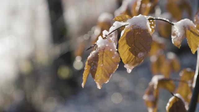 blätter und zweige mit schnee bedeckt - laub winter stock-videos und b-roll-filmmaterial