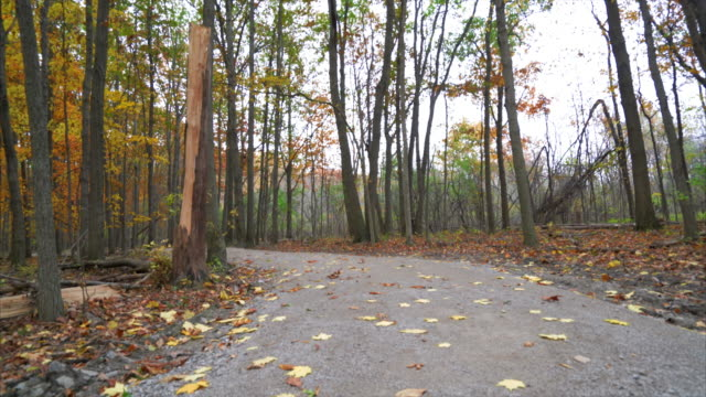 Leaves blowing across trail through woods in the fall video