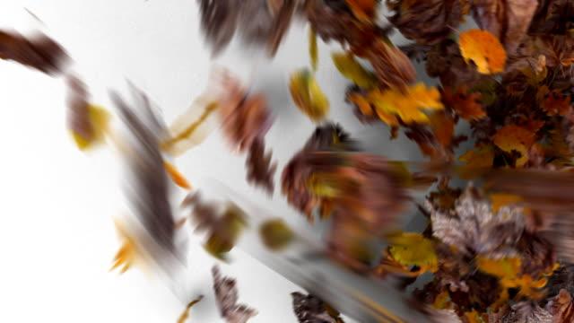 Leaves Blowing Away video