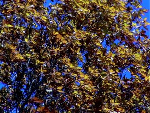잎 불기 풍력. progressiv 프레임 - 클립 길이 스톡 비디오 및 b-롤 화면