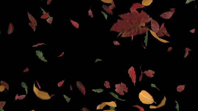 Leaves fall autumn falling seasons thanksgiving trees leaf 4k Leaves fall autumn falling seasons thanksgiving trees leaf 4k. thanksgiving stock videos & royalty-free footage