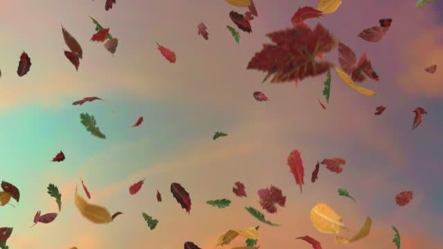 Leaves fall autumn falling seasons thanksgiving trees leaf 4k video
