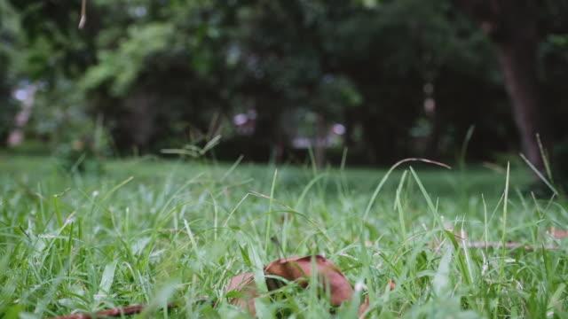 leaves falling down on green grass field - wood texture filmów i materiałów b-roll