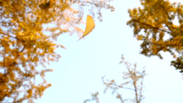 Leaves falling from trees at autumn video