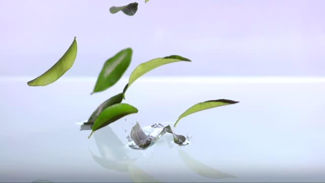blätter fallen in wasser (super zeitlupe) - grüner tee stock-videos und b-roll-filmmaterial