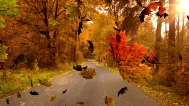 vídeos de stock, filmes e b-roll de folhas que caem - setembro amarelo
