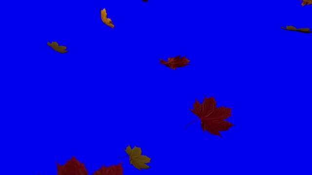 Leaves falling Leaves falling on blue screen fall leaves stock videos & royalty-free footage