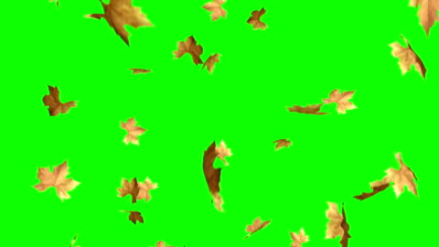 vídeos y material grabado en eventos de stock de hojas que caen con pantalla verde - caer