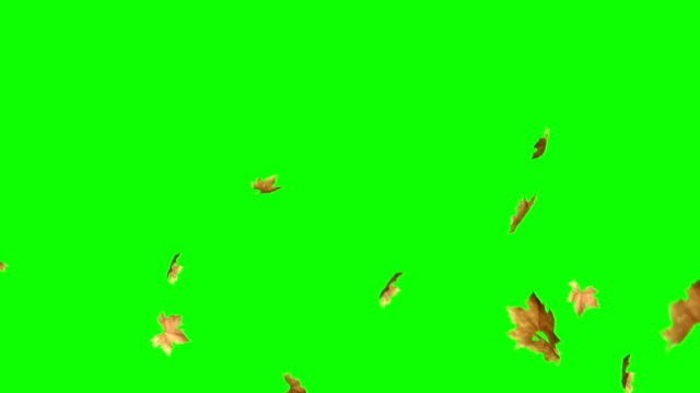vídeos de stock e filmes b-roll de leaves falling with green screen - leaf
