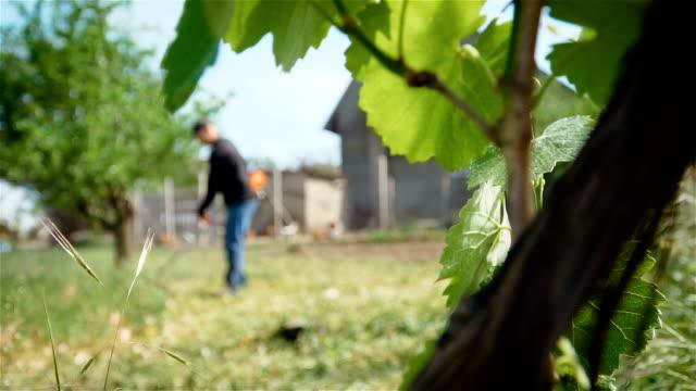 blätter der traube mit gärtner mäht hohes gras mit elektrischen rasen trimmer auf dembild - wildpflanze stock-videos und b-roll-filmmaterial