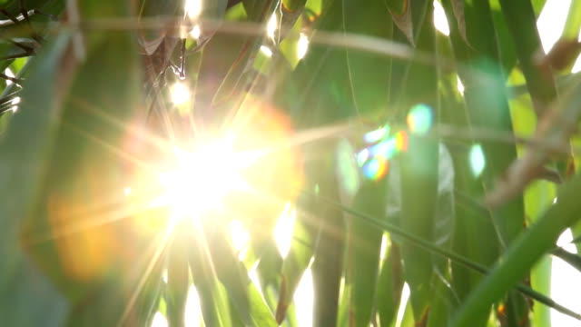 Leaves of tree with sunlight , chiangmai Thailand