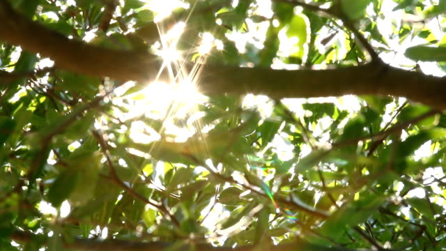 チェンマイ タイで太陽光でツリーの葉 - 木漏れ日点の映像素材/bロール