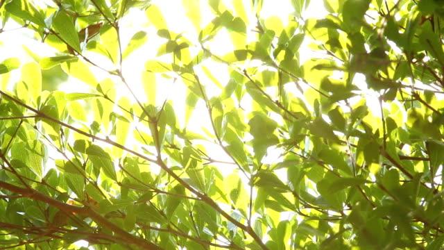 太陽の木の葉 - 木漏れ日点の映像素材/bロール