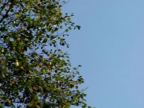 leaves on a tree 2 - 枝 植物部分 個影片檔及 b 捲影像